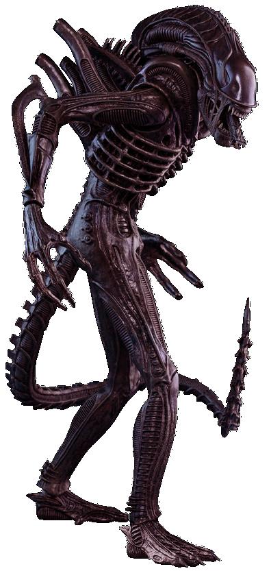 Xenomorph Monster Manual | GM Binder